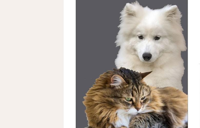 Laine de chien et de chat