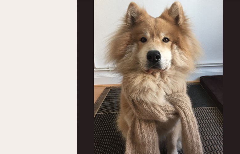 Echarpe avec le sous-poil de votre chien